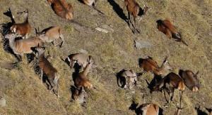 Jagen in Graubuenden